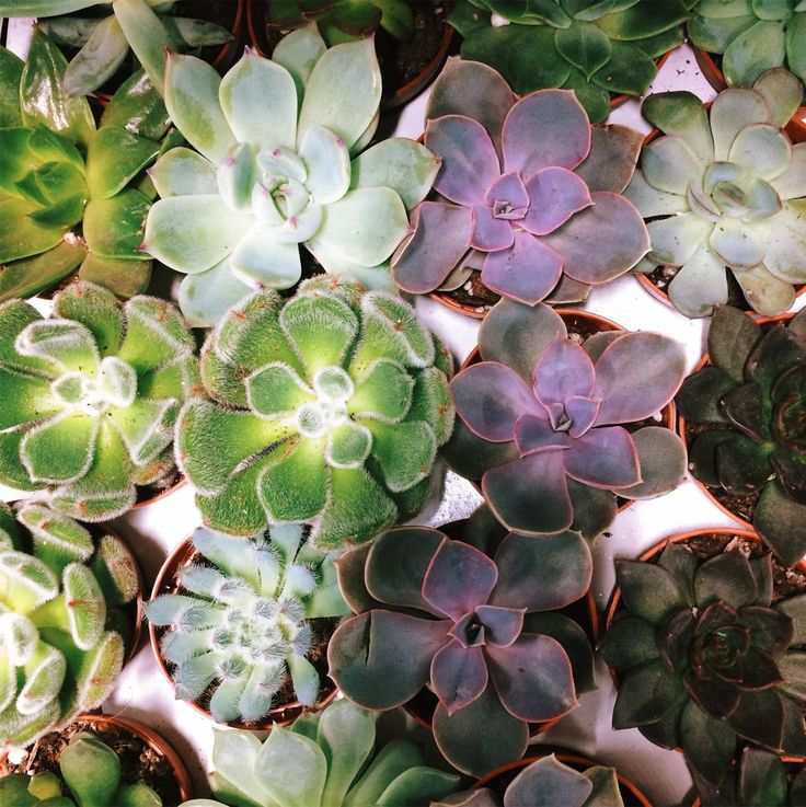 Вот такие замечательные #суккуленты есть в наличии, их можно приобрести как поштучно, так и с флорариумом.  #идеидляподарка #decorationidea #florarium #лофтмебель #цветывинтерьере #москвацветы #glassbox #свадьбадекор #loft #weddingstyle #orchids #lovefashion #золото #флористика #greenhouse #суккулент #кактус