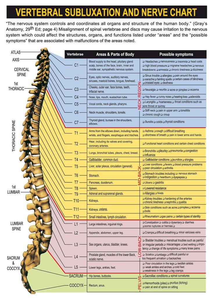 Spinal nerve chart with effects of vertebral subluxations and pinched nerves | health & wellness