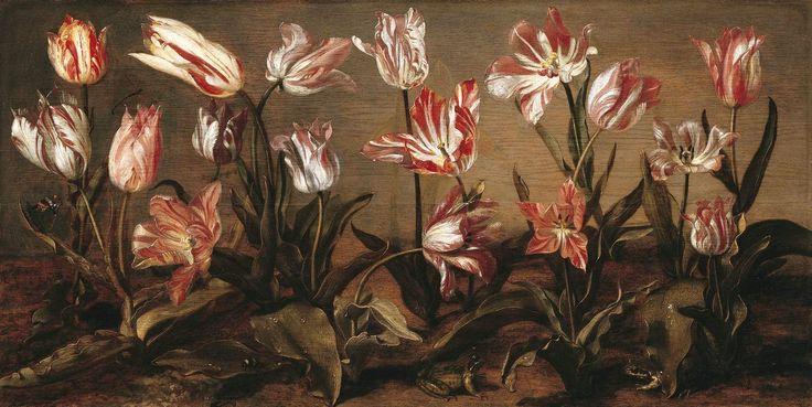 Tulpenbed | J. Cuyp. Tulpen waren supertrendy in de Gouden eeuw. Iedereen wilde de bollen in zijn tuin. Het meest geliefd was de soort met vreemd gevormde vlammen. Nieuwe soorten werden vernoemd naar de eigenaar of diens functie, plaats van herkomst, de kweker of een Griekse godin. Nog steeds worden namen aan nieuwe tulpen gegeven, maar de Jacob Cuyp tulp bestaat nog niet.