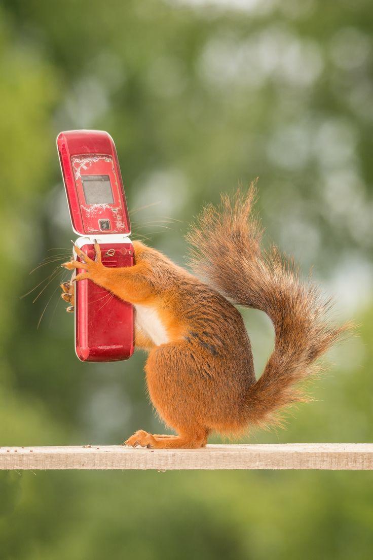 нынешний год картинки для телефона приколы изображения