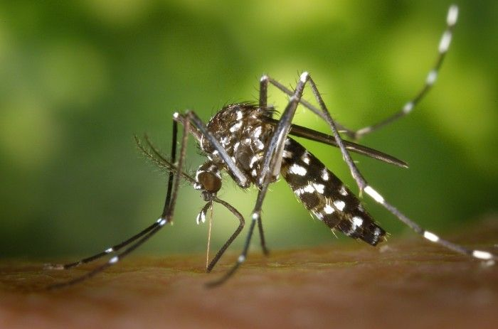 Casos de chikungunya disparam em Minas Gerais; uma morte é investigada