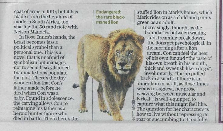 The Telegraph review of Green Lion