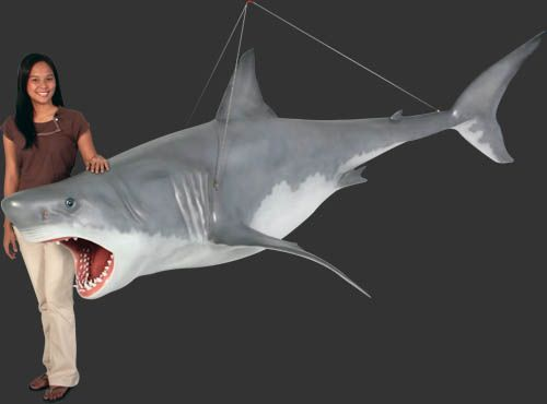 250 Great White Shark 11 Ft Hanging Might Come Down