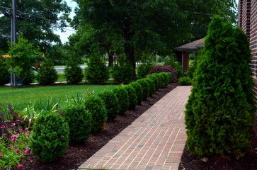Winter Gem Boxwoods & Green Giant Arborvitae Screen lined walkway