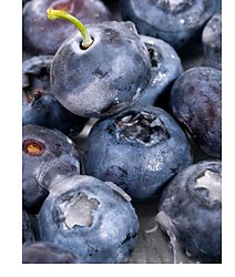 Healthy Blueberry Smoothie Recipes