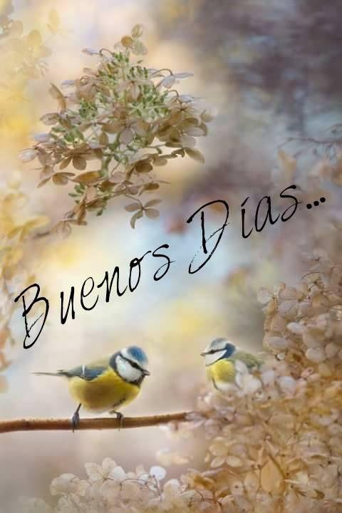 Buenos Dias  http://enviarpostales.net/imagenes/buenos-dias-598/ Saludos de Buenos Días Mensaje Positivo Buenos Días Para Ti Buenos Dias