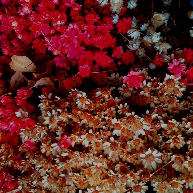 Descrivi il tuo pin...fiori