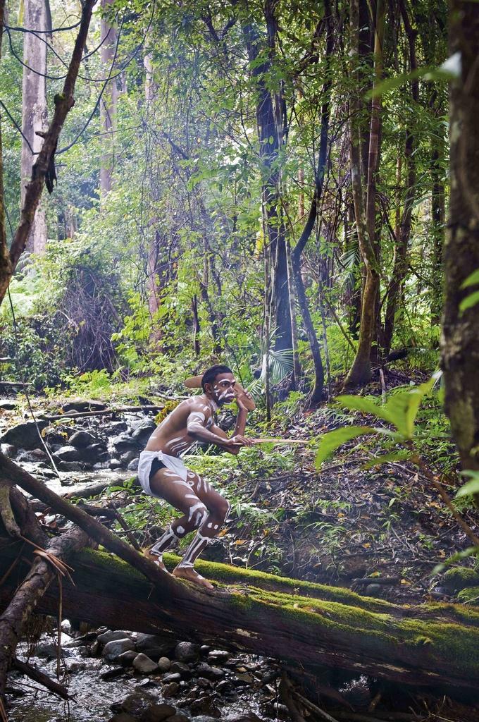 Border Ranges National Park © Trevor Worden, Murwillumbah, NSW