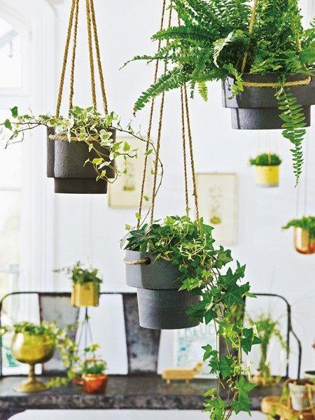 98 besten blumen und pflanzen bilder auf pinterest. Black Bedroom Furniture Sets. Home Design Ideas