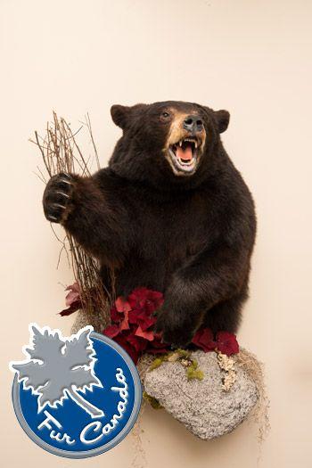 Black Bear Half Mount Wildlife Mounts - Taxidermy for Sale - Furcanada - Taxidermy Mounts
