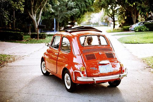 Love it, the Fiat 500