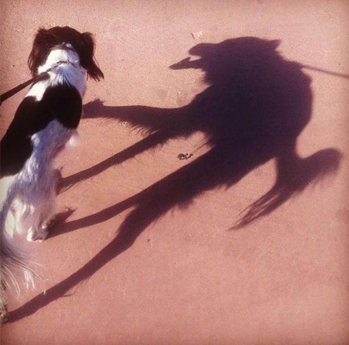 las sombras parecen algo diferente