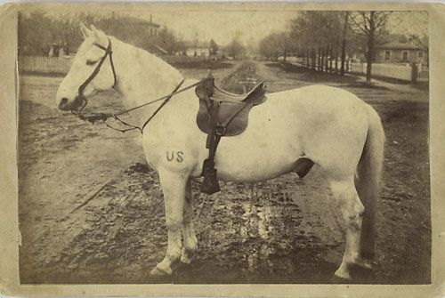 """Frank, a Civil War mount, was present at Gettysburg-  """" Image of a white horse in saddle and bridle with US brand on left leg standing in middle of a dirt street; reverse with printed history and list of battle in which Frank participated: 14 battles from Gettysburg to Appomattox, serving with Battery D, 1st N.Y. Artillery, 5th Army Corps """"  Gives you chills."""