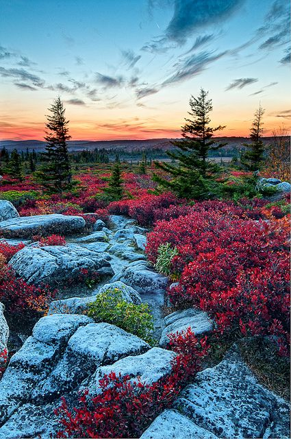 Bear Rocks, Dolly Sods Wilderness, West Virginia by Chuck Robinson