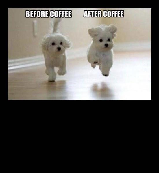 Yep Coffee Has Magic Powers Cute Baby Animals Cute Animals