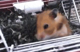 When this adorable hamster… | 23 Moments That Took You By Surprise what in the world?