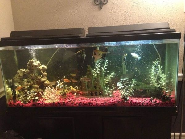 17 best images about fish tank stuff on pinterest caves for Pink fish tank