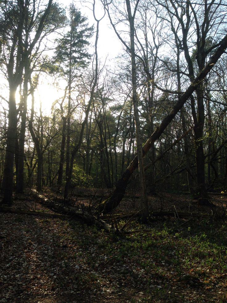 Ulvshale skov Dejlig forårssol ☀️