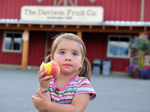 Davison Orchards web work
