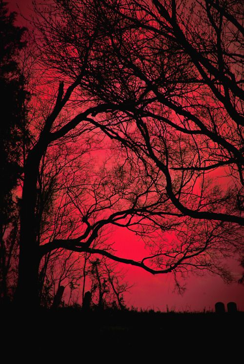 Red Sky Pictures, Photos, and Images for Facebook, Tumblr, Pinterest, and Twitter