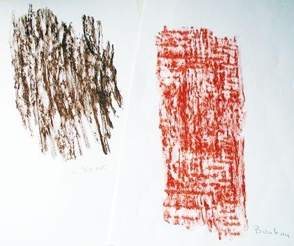 Empreinte écorces d'arbres