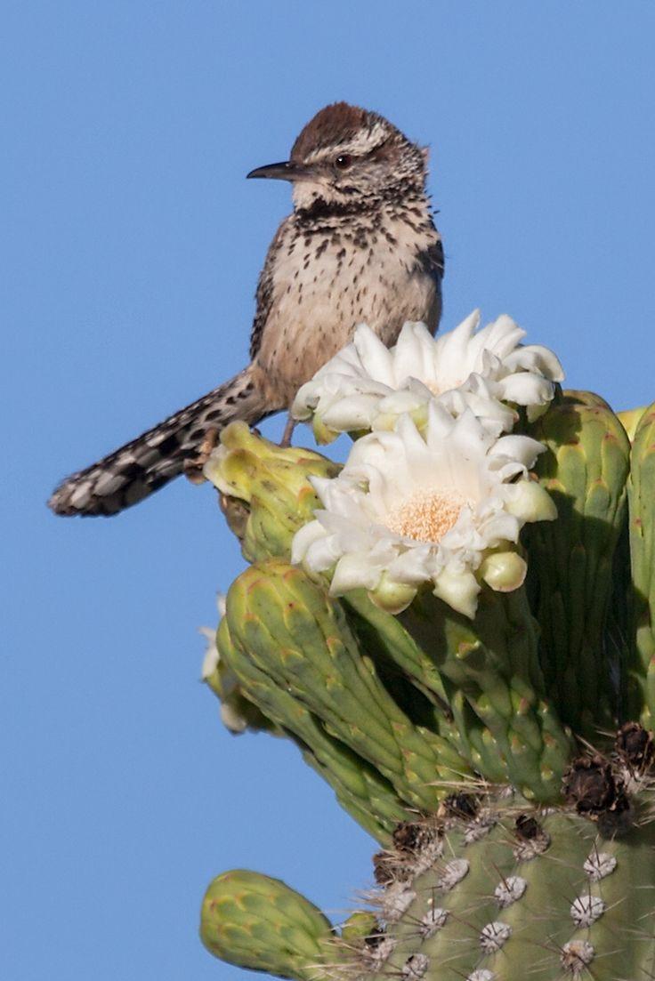 Mejores 400 imágenes de Art-Birds en Pinterest | Acuarelas, Acuarela ...