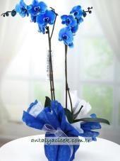 Mavi Orkide #gemini #janvincentsjohannessen #magnorglassverk #magnor #nyhet #håndlaget #munnblåst #norskdesign #vase #skål #hverdagsluksus #interiorlover #gave #flowers #gift #fat #håndlagetlykke #orkide #orchid