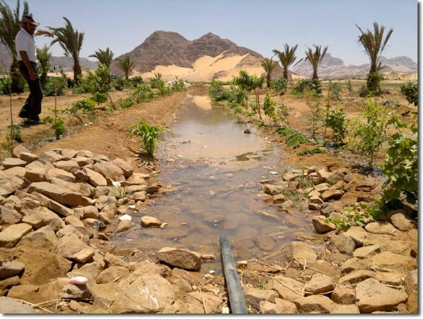 Desert Food Forest and Organic Commercial Production in Three Years - Update on Wadi Rum Consultancy