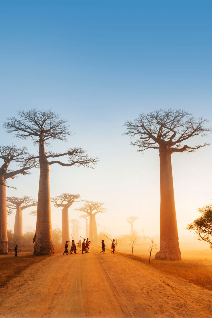 Justin Foulkes took this wonderful shot of Madagascar's Avenue of the Baobabs for our 100th issue newsstand cover. Pick up a copy of the issue to discover our ultimate guide to this beautiful island nation! #madagascar #baobab #africa