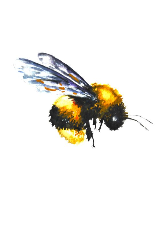 Watercolor Painting Original Fine Art Bumble Bee by WoodPigeon