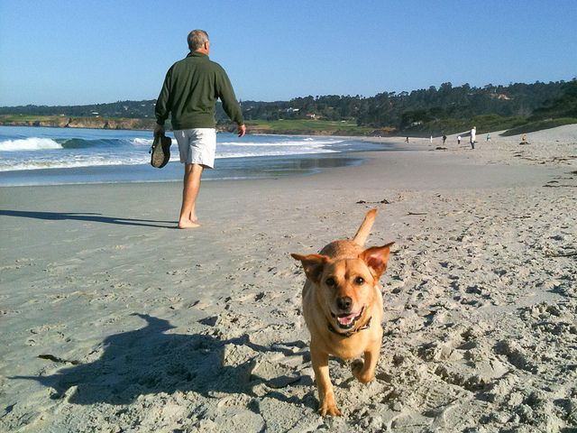 A Dog Friendly Guide to Carmel-by-the-Sea, California