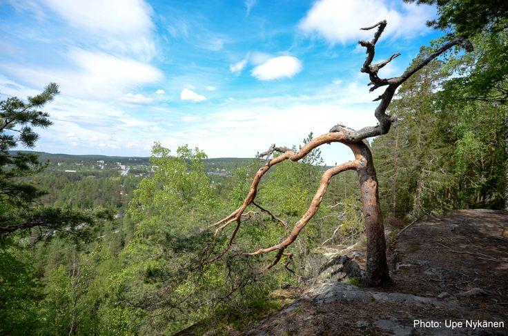 Kanavuori nature trail. Photo: Upe Nykänen.