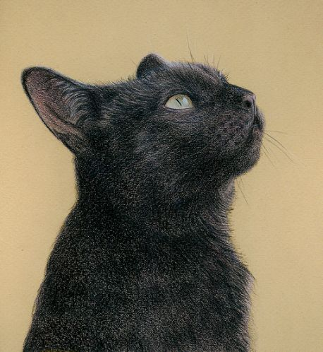 """Black Cat"" in coloured pencil by Katrina Ann, English contemporary artist:"