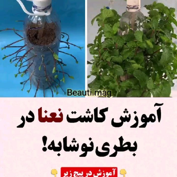 244 Likes 6 Comments فود برگر Food Bergger On Instagram Beauti Mag آموزش کامل در Beauti Mag بچه ها پیشنهاد ویژه من Beauti Mag ت In 2021 Plants