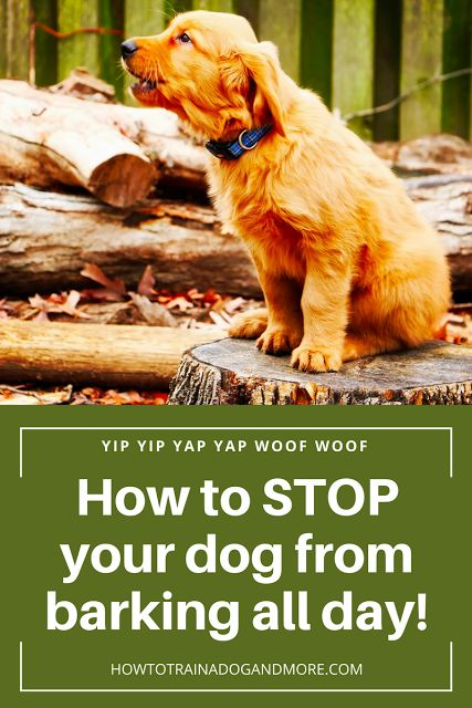 Dog Barking All Day..Are you looking for a way to stop your dog from barking? Are your neighbors complaining? ....visit this blog for lots of dog training tips, including barking, biting, aggression, toilet training, jumping, pulling, separation anxiety and more!