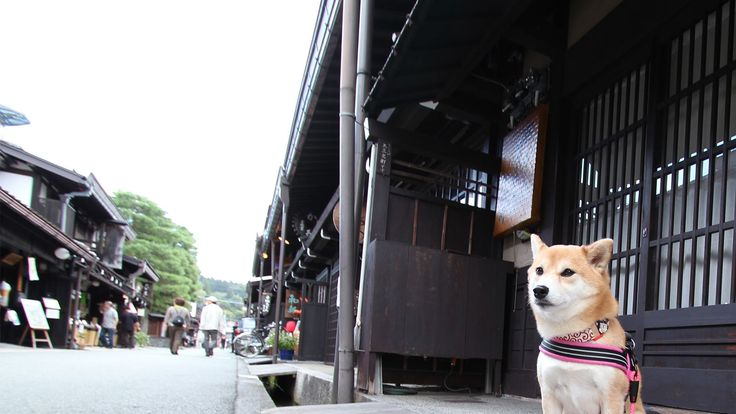 Had a ruff day? Here is some news to make your tail wag! Rakuten Travel has just announced the results of its Facebook poll to find the cutest hotel mascot dog in Japan. Of course, all dogs are cute, but which pooch reigns supreme? Check out the article to find out and see some photos of some adorable doggies-turned-celebrities!