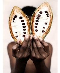 "photographer HOLLY WILMETH  ""cacao guatemala""  http://www.hollywilmeth.com/"