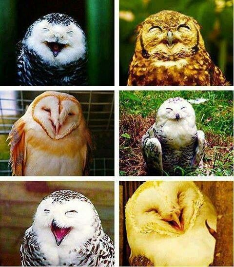 Happy Owls