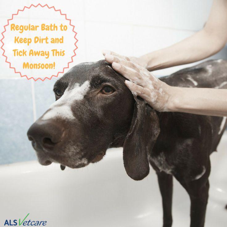 Use anti-tick/anti-flea shampoos to keep your dog dirt and tick free. #dogcare #monsoonhealthtips #petparent #doglover #doghealth #vetcare