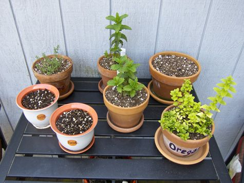 Balcony Herb Garden. This Is What Weu0027ll Be Doing. I Donu0027