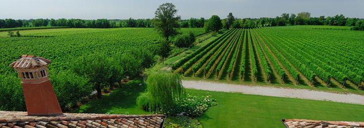 View from the top on the Merlot vineyard 'Vigna dei Padri'
