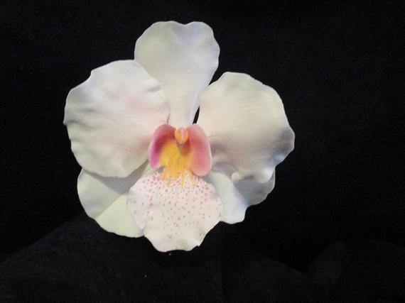 Orchid Cake Topper Singapore Orchid Vanda Orchid Gumpaste Sugar Flowers Edible W Cake Edible Flowers Gumpaste Or In 2020 Orchid Flower Orchid Cake Vanda Orchids