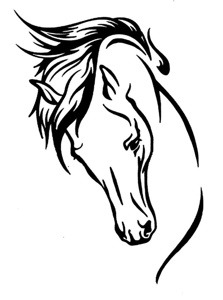 ELEGANT HORSE HEAD STICKER DECAL BRAND NEW FOR CAR, FLOAT, TACK BOX #H262
