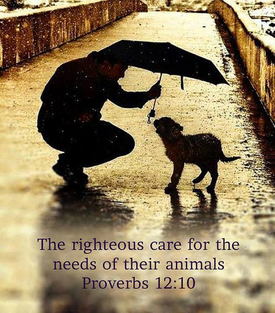Proverbs 1210 The righteous one takes care of his domestic animals, But even the mercy of the wicked is cruel.