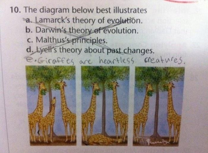 giraffes are dicks. hahaha: Heartless Creatures, Funny Pictures, Young Children, Hard Time, Test Answers, Funny Test, Schools Work, Eddie Izzard, Smart Kids
