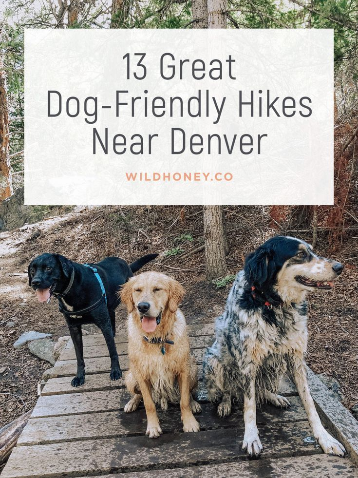 13 Dog Friendly Hikes Near Denver Wild Honey Hiking With Dogs