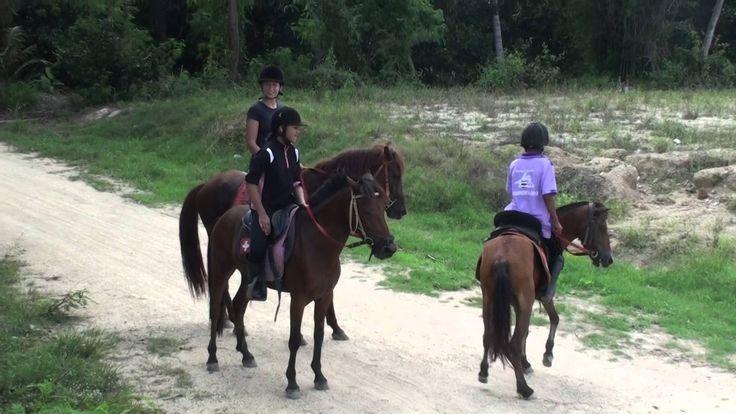 Horse riding in Pattaya, Thailand. Верховая езда в Паттайе, Конные прогу...
