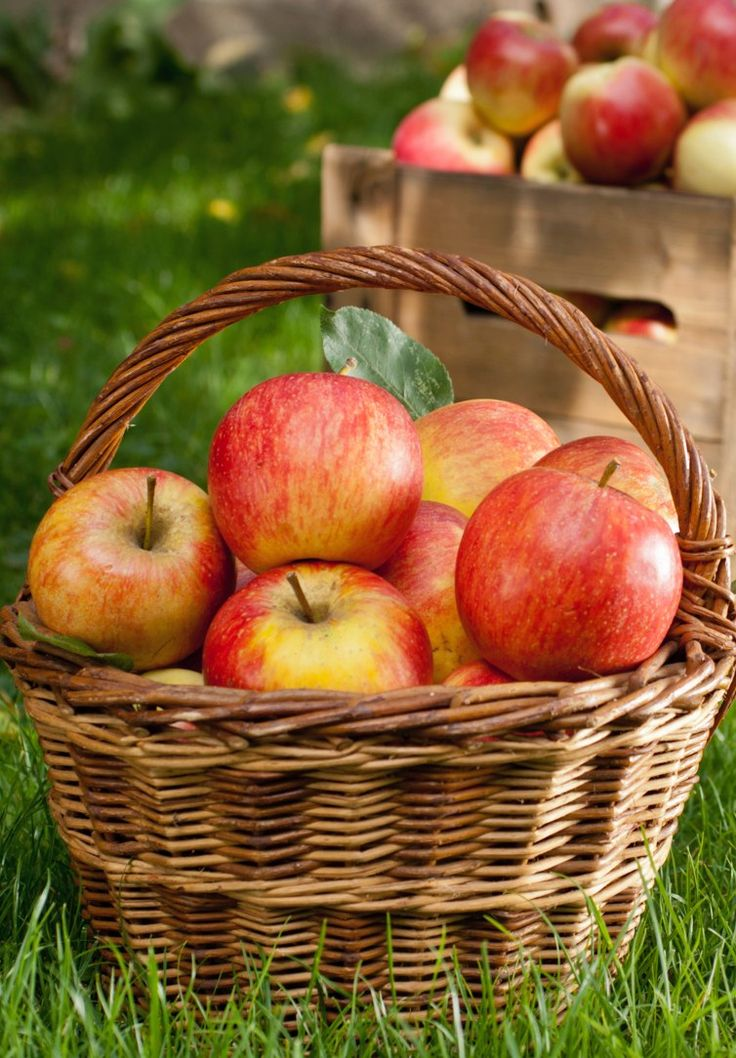 Eat the Season! Tips for a Successful Trip to the Apple Orchard #feelingfall #fall #autumn