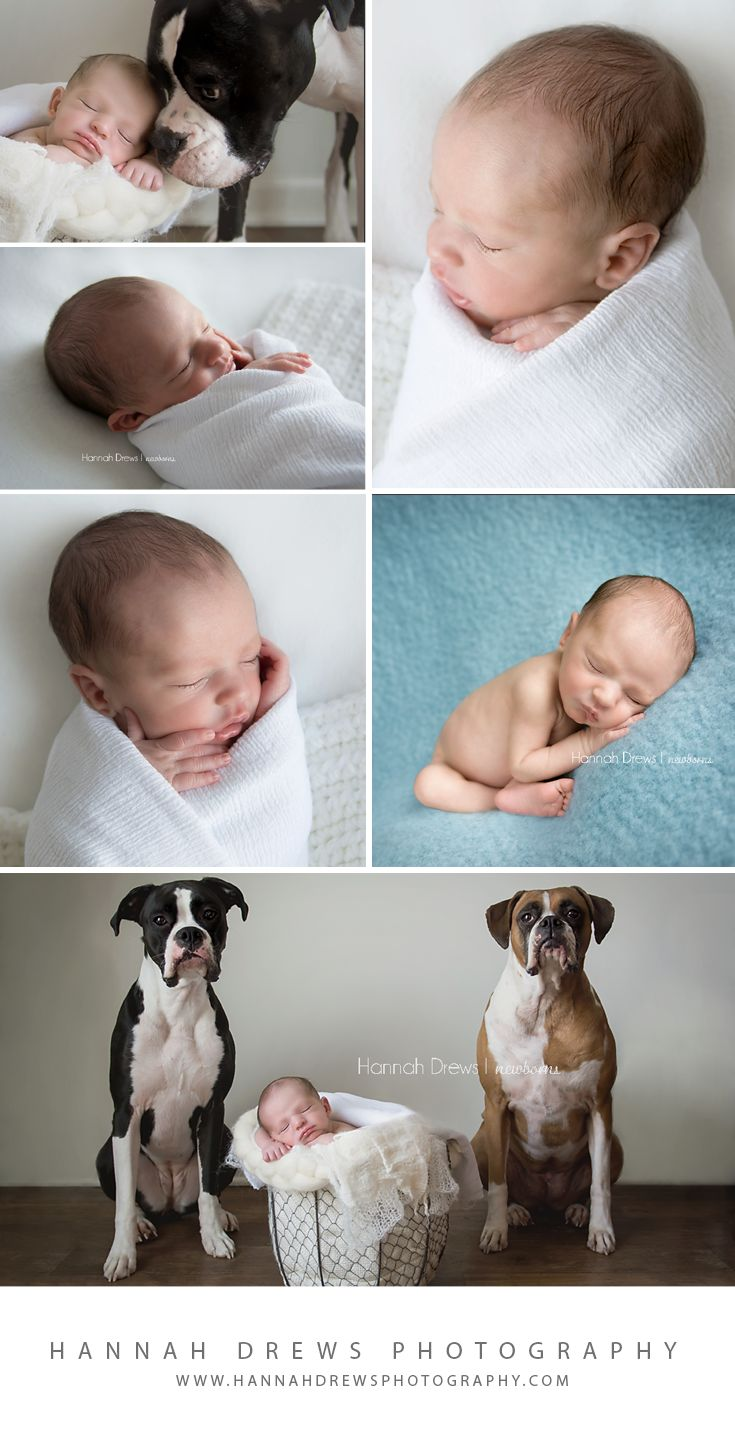 Hannah Drews Photography I Chicago Newborn Photographer #chicagonewborn #newbornportraits  newborn and dog photos, baby and dogs, newborn with pet