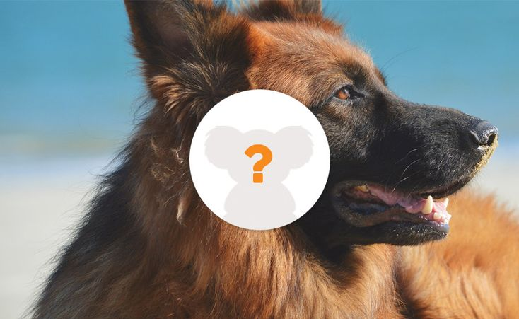 Dogs are man's best friend. With the length of time that they've shared with humans, some dog breeds now mimic human personalities. Unknown to most, dogs have more wonderful attributes that go beyond loyalty. All these characteristics can either make them a good protector, companion, playmate, hunter, or just a plain best friend. Take the quiz and find out which is best for you!